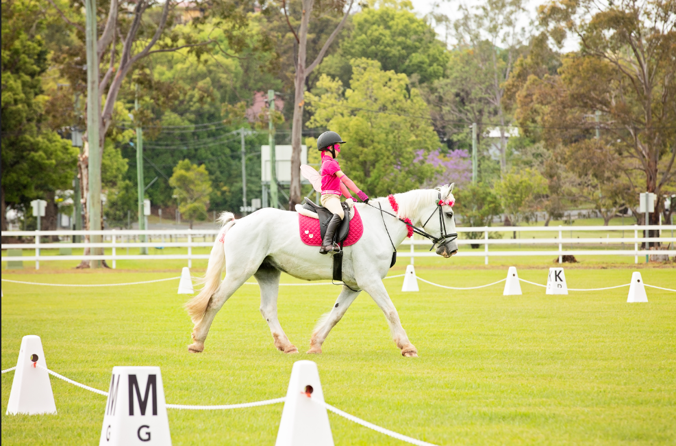 Forms & Dressage Tests